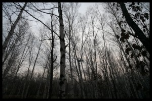 Spooky Forest - Russia