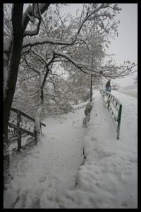 Snow - Vladivostok
